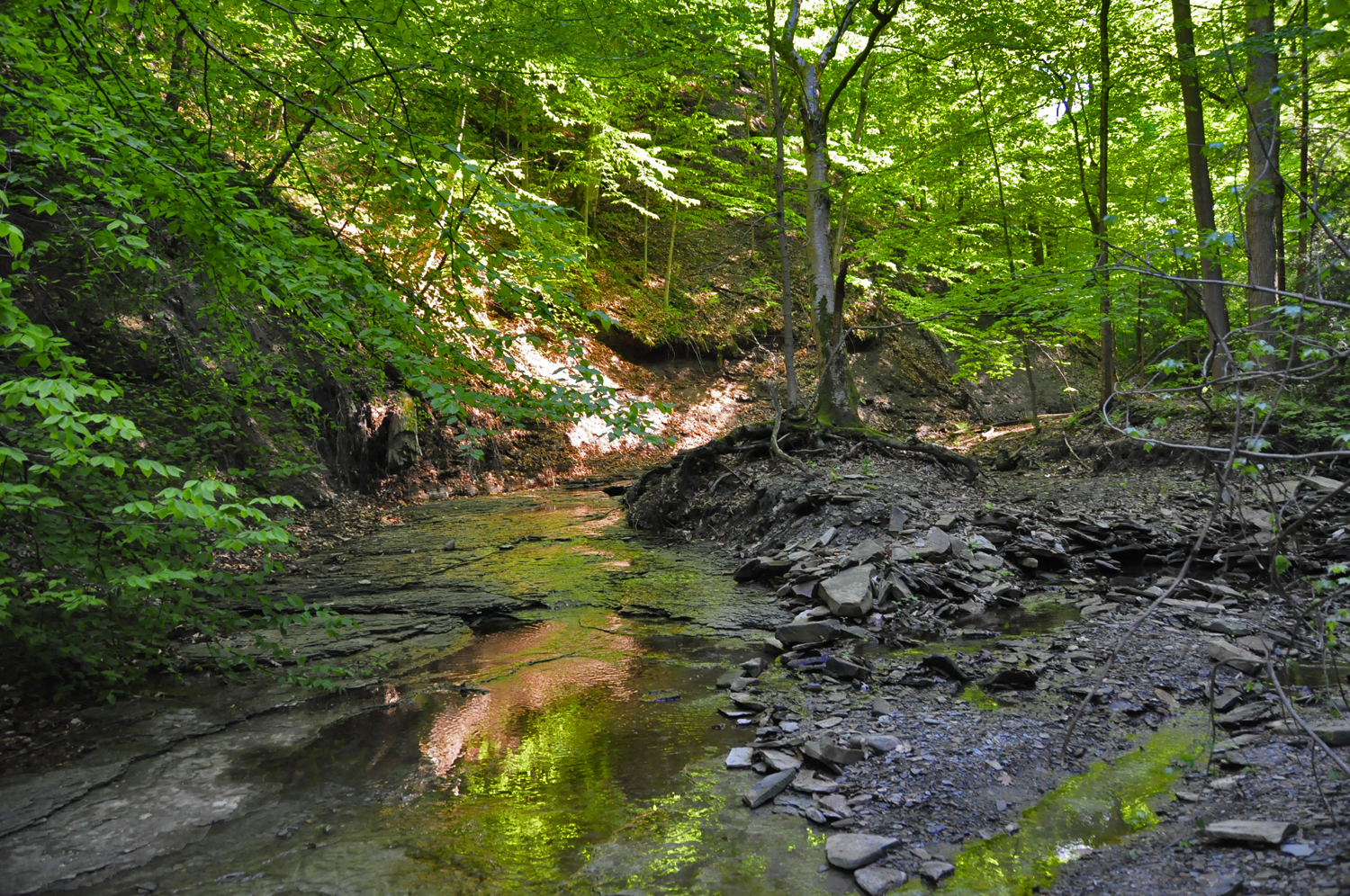 The Cleveland Metroparks – CBS Cleveland