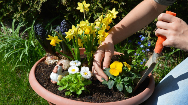 Daffodils, Spring Garden, Planting, Growing, Flowers