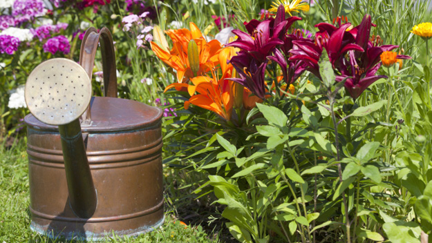 Spring Garden, Lily, Lilies, Planting, Flowers